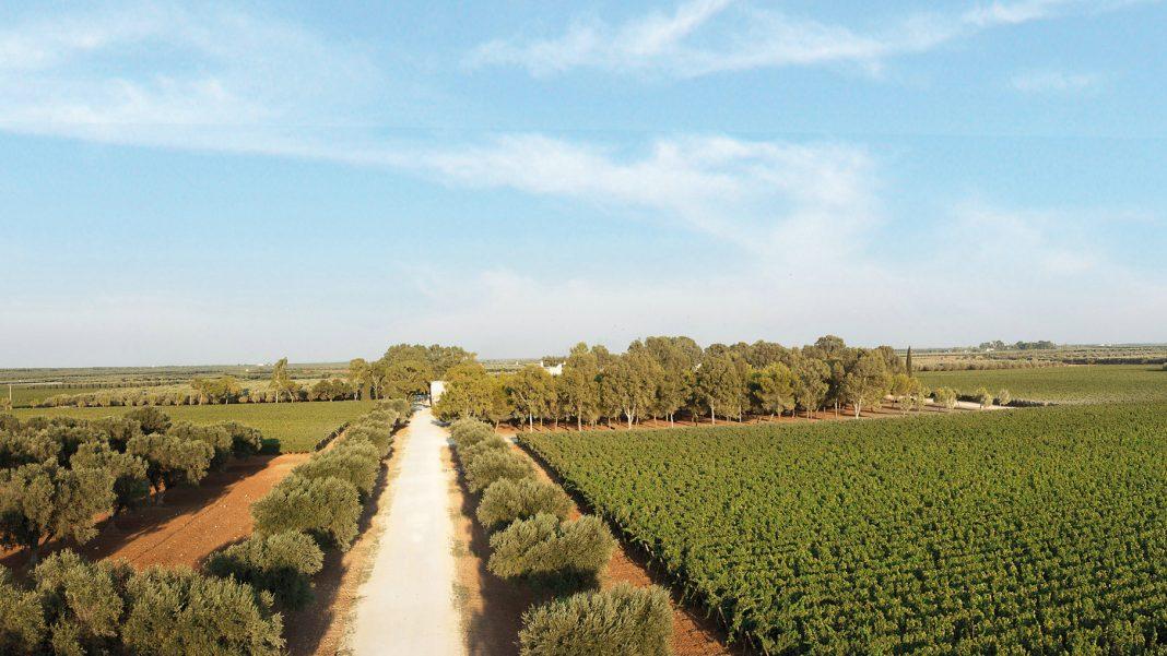 傲牧园,普利亚,意大利   Masseria Altemura Estate, Puglia, Italy