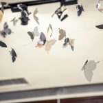 飞舞的蝴蝶 | The Flying Butterflies